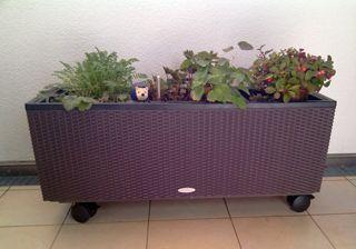 HPL Pflanzenroller